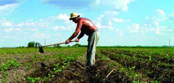 Câmara aprova socorro à agricultura familiar; Deputados comemoram